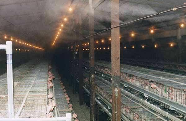Kết quả hình ảnh cho máy phun sương cho trang trại